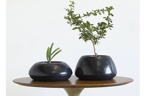 Interior Desk Planter